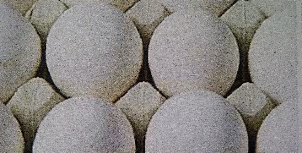 human view of A class eggs (not washed)
