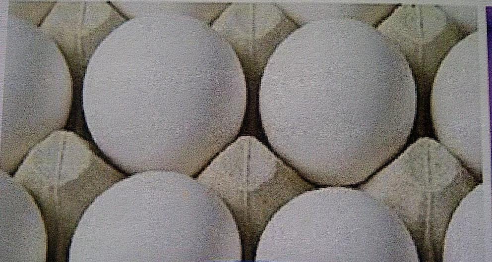 Human view of same eggs after egg washing